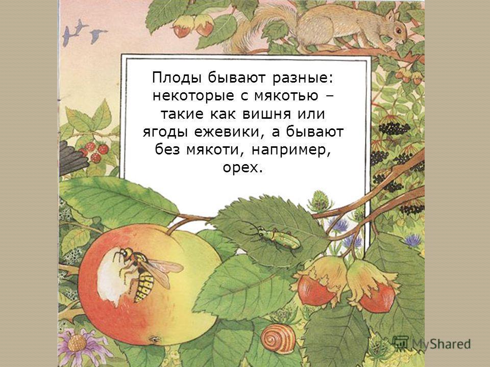 После того, как на цветок попала пыльца с соседнего цветка, на нем начинает созревать плод.