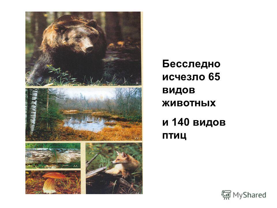 Бесследно исчезло 65 видов животных и 140 видов птиц