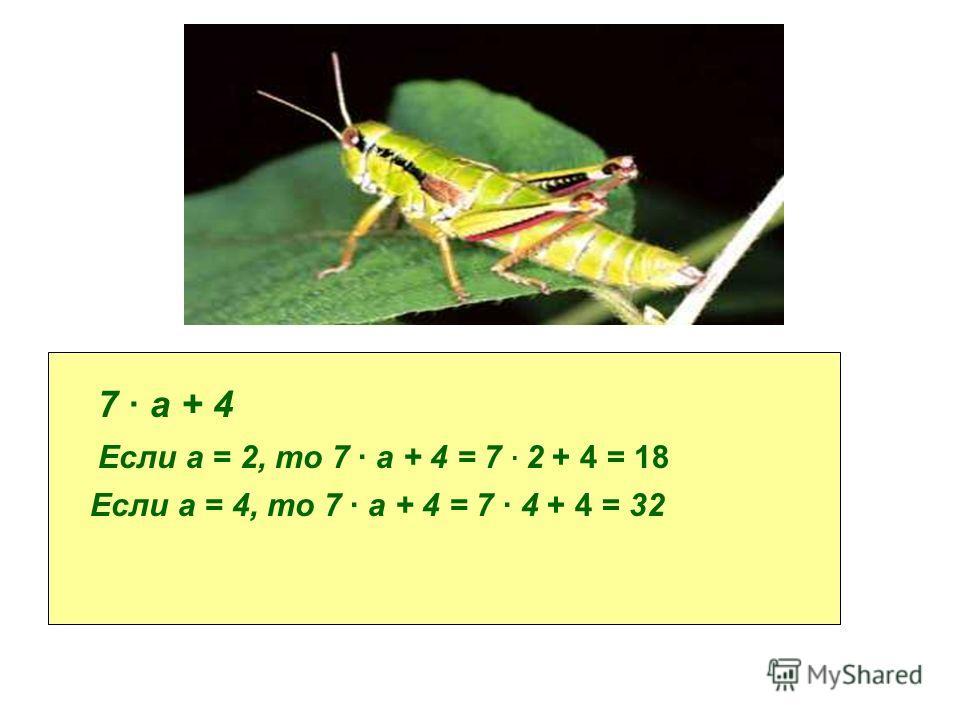 К количеству стрекотаний за 7 с прибавить 4. Пусть за 1с кузнечик совершает а стрекотаний. Составьте выражение для решения задачи и найдите его значение при а = 2, 4. 7 а + 4 Если а = 2, то 7 а + 4 = 7 2 + 4 = 18 Если а = 4, то 7 а + 4 = 7 4 + 4 = 32