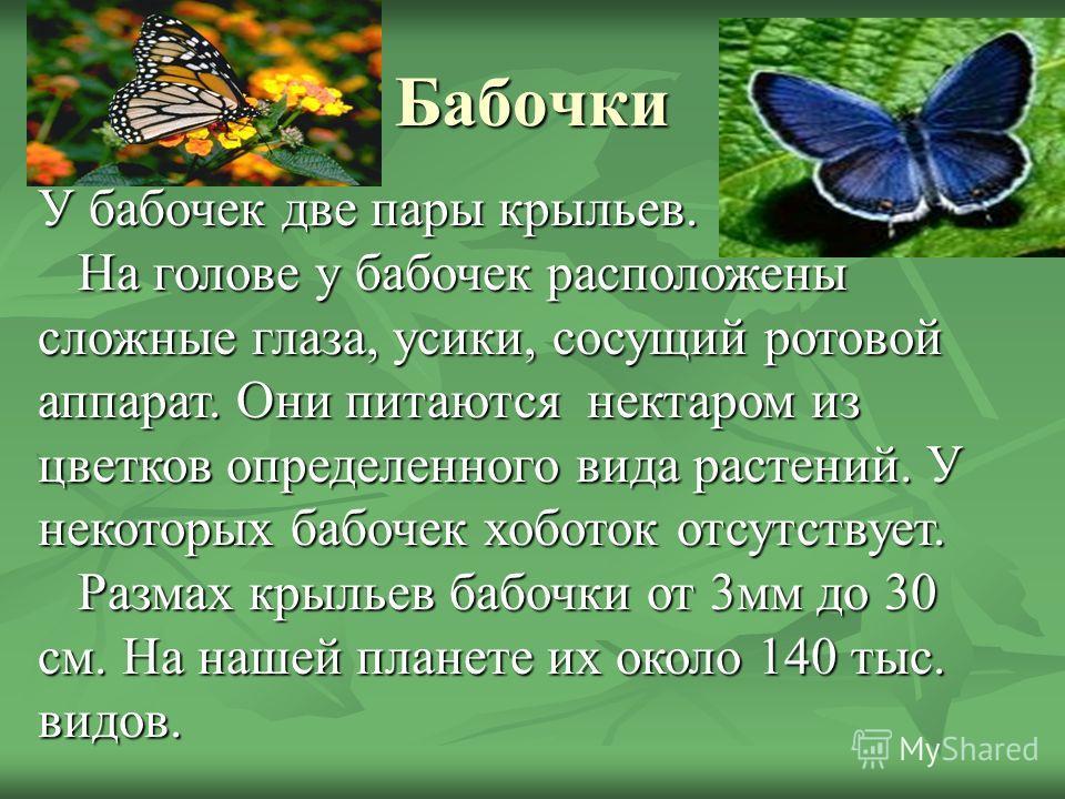 Бабочки У бабочек две пары крыльев. На голове у бабочек расположены сложные глаза, усики, сосущий ротовой аппарат. Они питаются нектаром из цветков определенного вида растений. У некоторых бабочек хоботок отсутствует. На голове у бабочек расположены
