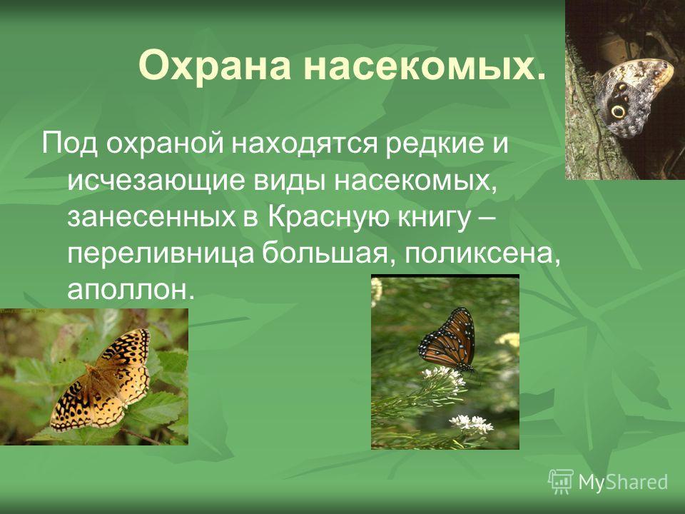 Охрана насекомых. Под охраной находятся редкие и исчезающие виды насекомых, занесенных в Красную книгу – переливница большая, поликсена, аполлон.