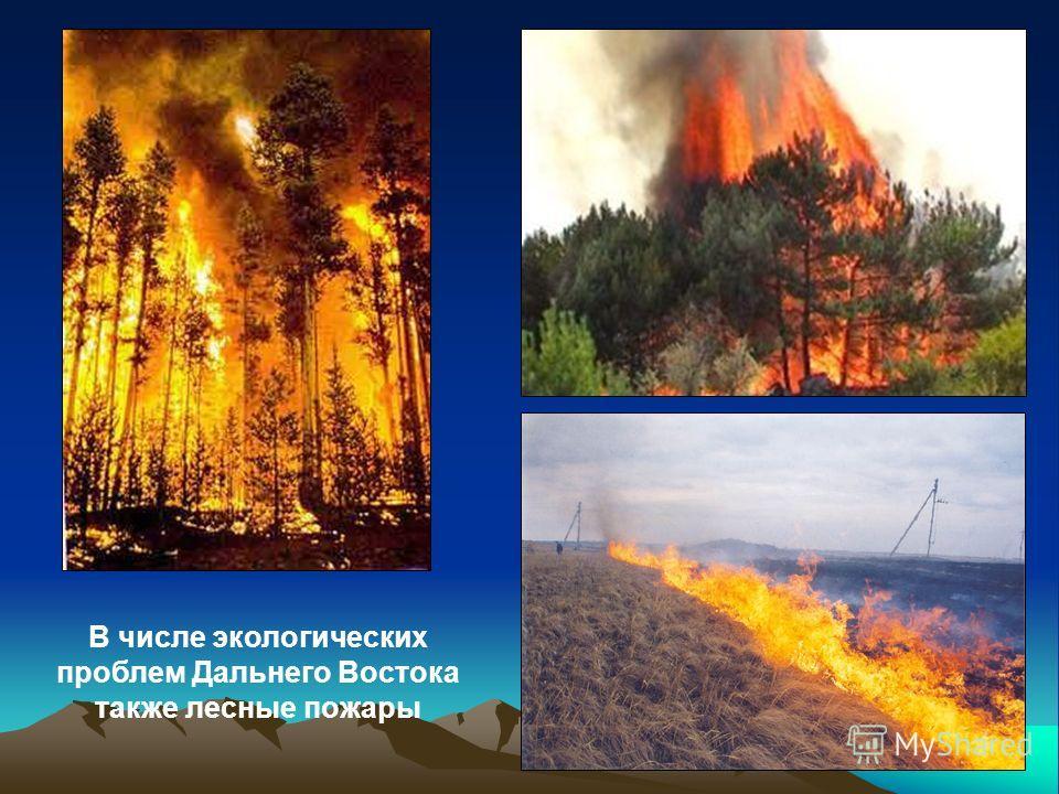 В числе экологических проблем Дальнего Востока также лесные пожары