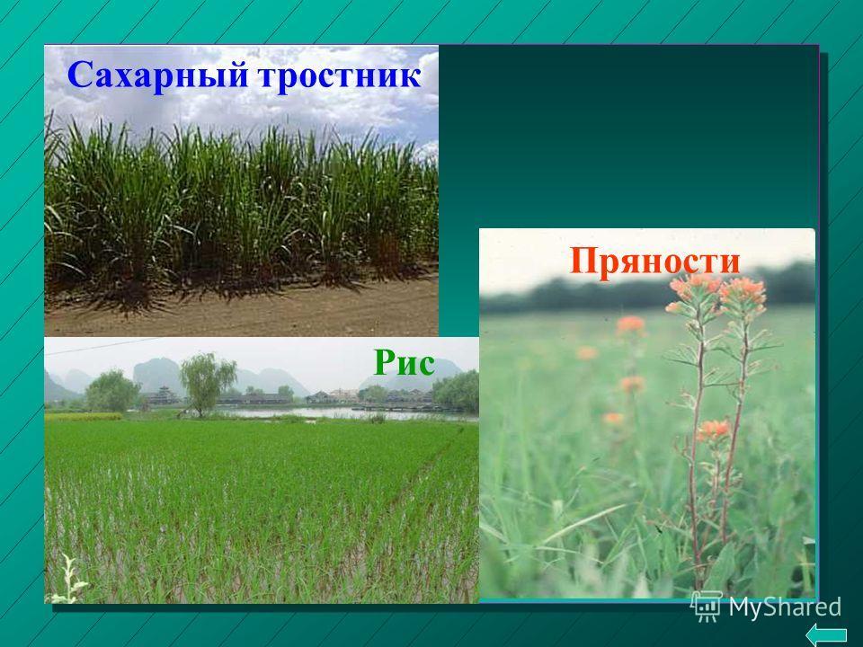 ЗАНЯТИЯ скотоводство земледелие Занятия.