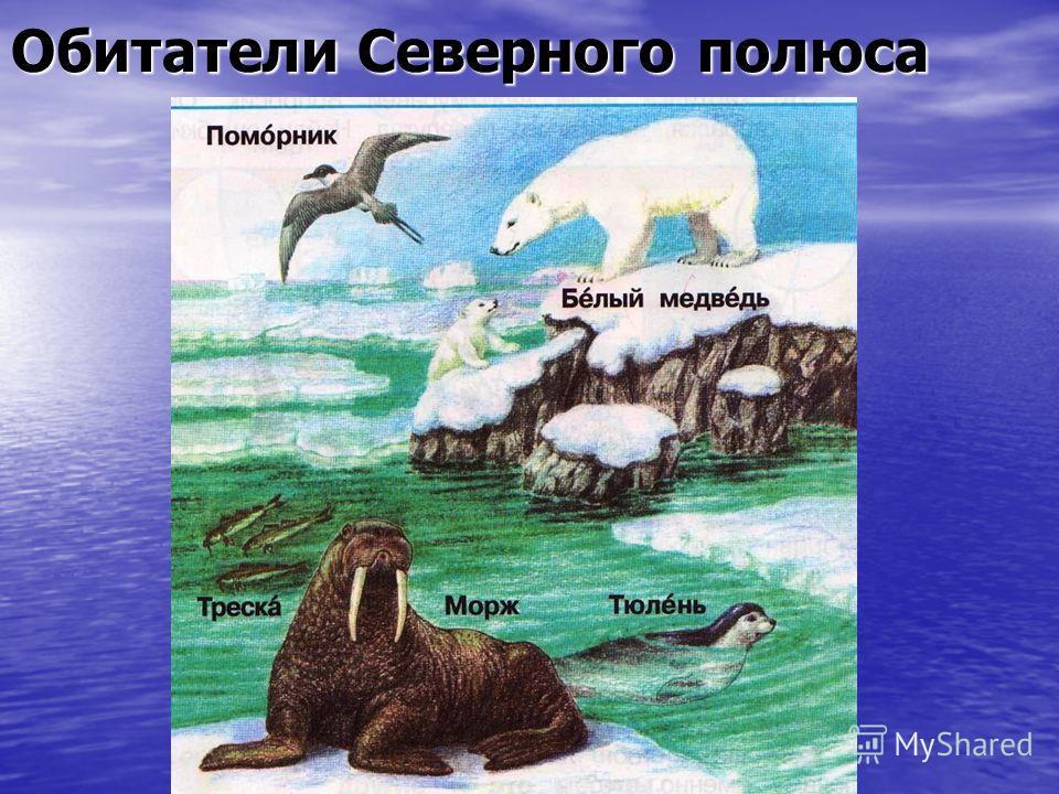 Обитатели Северного полюса