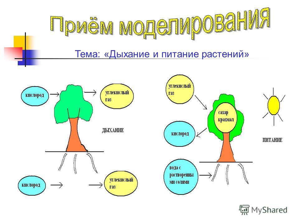 Тема: «Дыхание и питание растений»