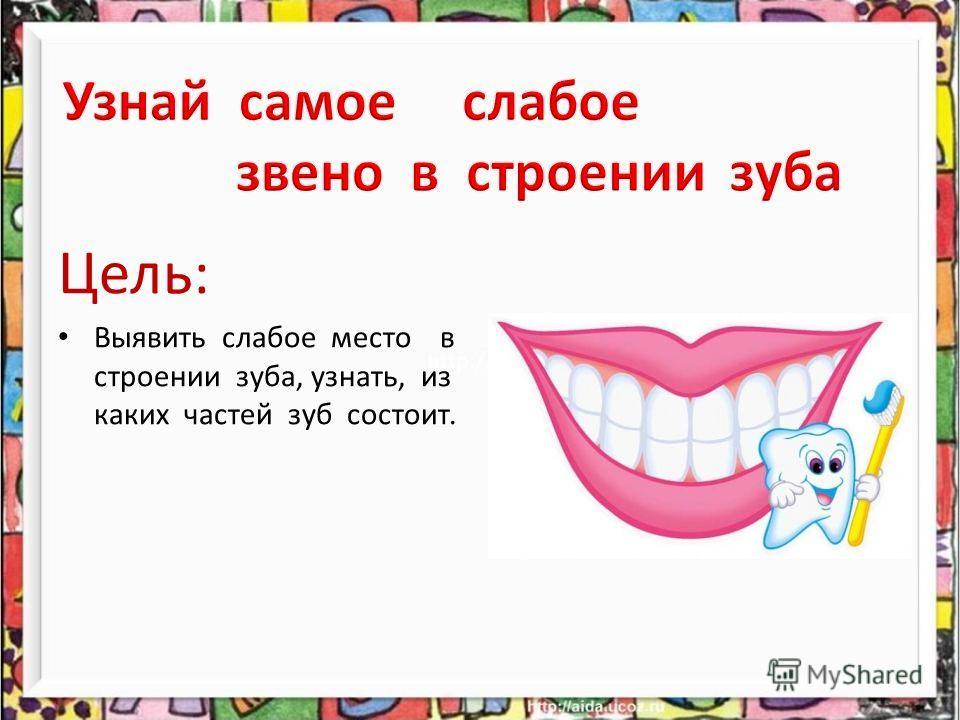 Цель: Выявить слабое место в строении зуба, узнать, из каких частей зуб состоит.