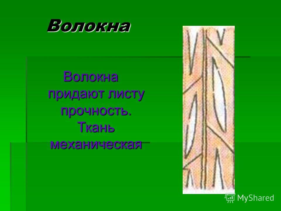 Волокна Волокна придают листу прочность. Ткань механическая