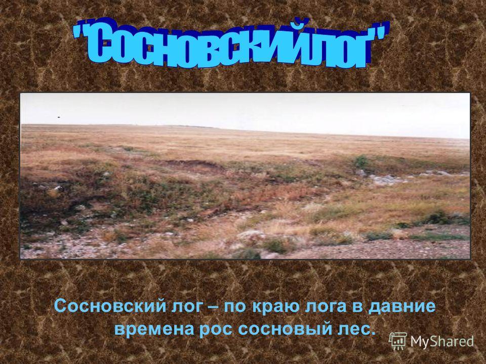 Сосновский лог – по краю лога в давние времена рос сосновый лес.