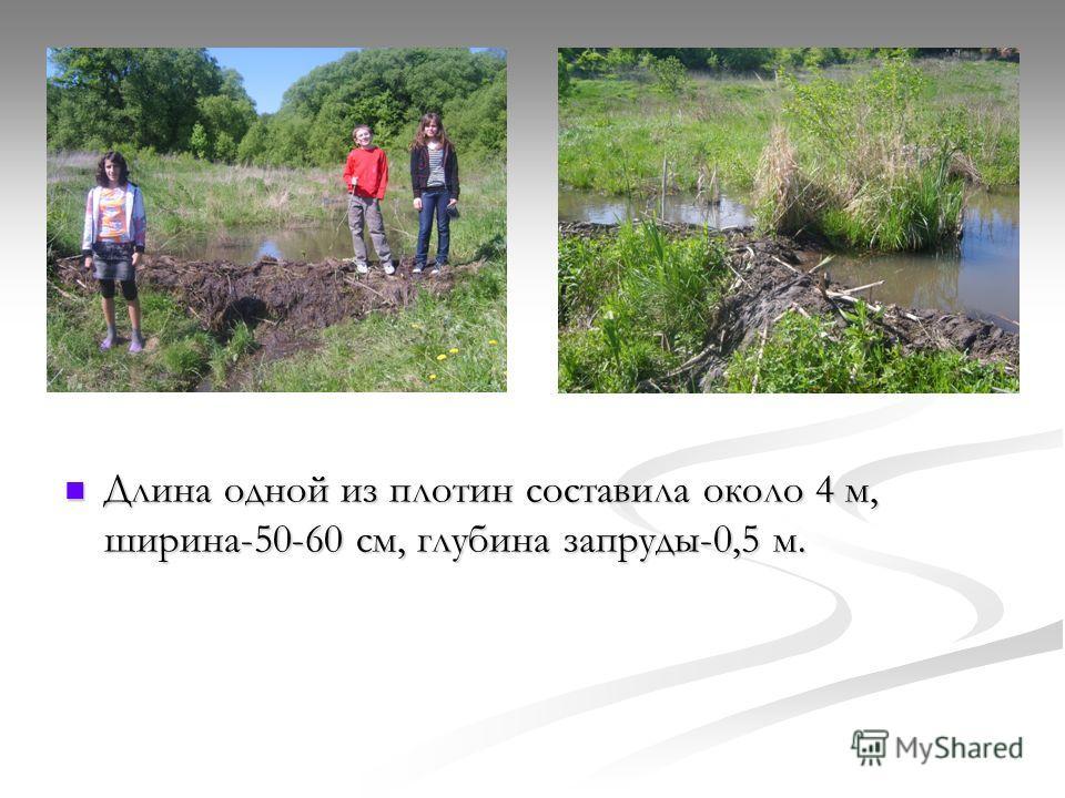 Длина одной из плотин составила около 4 м, ширина-50-60 см, глубина запруды-0,5 м.