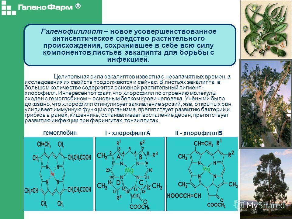 Галенофиллипт – новое усовершенствованное антисептическое средство растительного происхождения, сохранившее в себе всю силу компонентов листьев эвкалипта для борьбы с инфекцией. Целительная сила эвкалиптов известна с незапамятных времен, а исследован