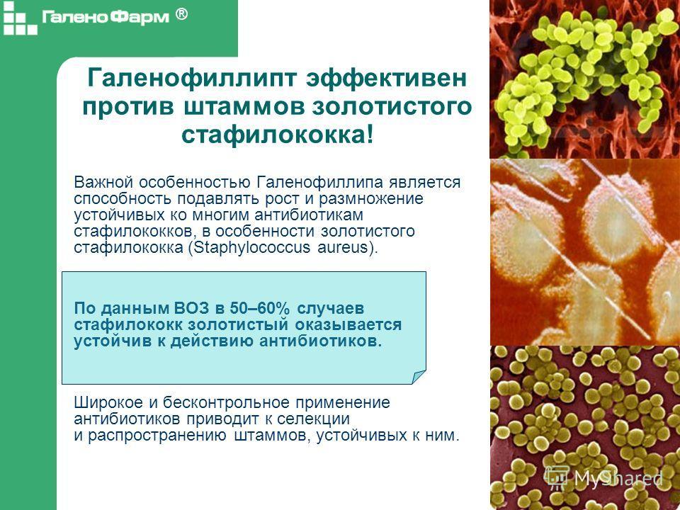 Галенофиллипт эффективен против штаммов золотистого стафилококка! Важной особенностью Галенофиллипа является способность подавлять рост и размножение устойчивых ко многим антибиотикам стафилококков, в особенности золотистого стафилококка (Staphylococ