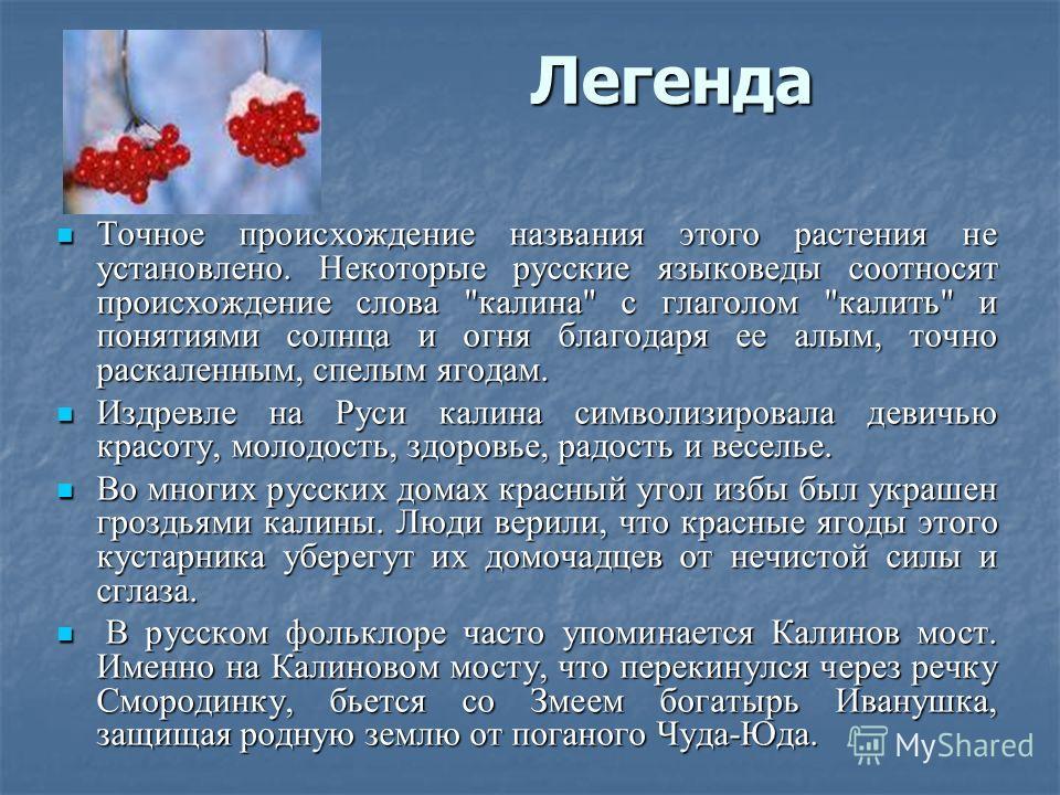 Легенда Точное происхождение названия этого растения не установлено. Некоторые русские языковеды соотносят происхождение слова