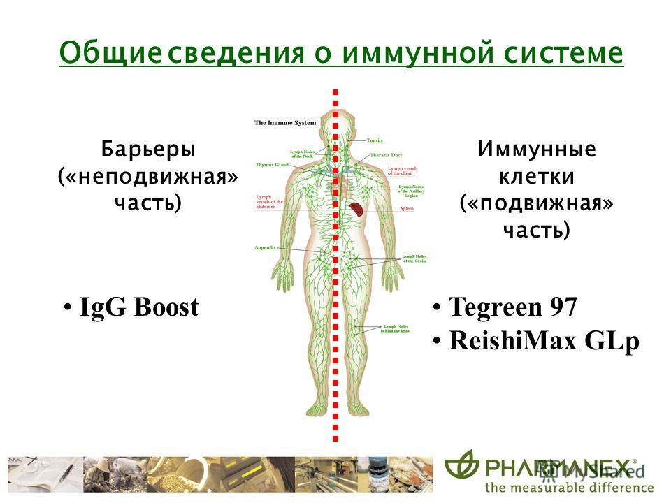 Общие сведения о иммунной системе IgG Boost Tegreen 97 ReishiMax GLp Иммунные клетки («подвижная» часть) Барьеры («неподвижная» часть)