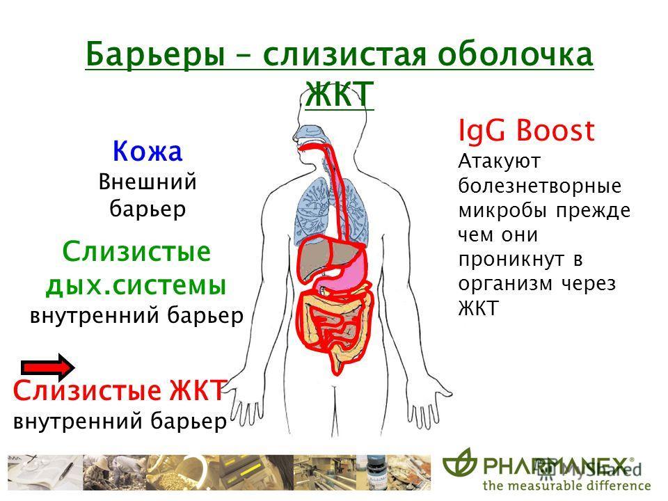 Барьеры – слизистая оболочка ЖКТ IgG Boost Атакуют болезнетворные микробы прежде чем они проникнут в организм через ЖКТ Кожа Внешний барьер Слизистые дых.системы внутренний барьер Слизистые ЖКТ внутренний барьер