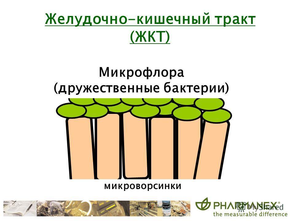 микроворсинки Микрофлора (дружественные бактерии) Желудочно-кишечный тракт (ЖКТ)