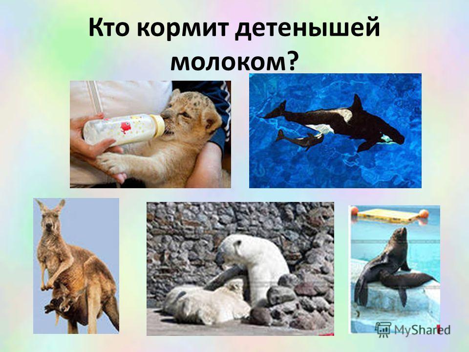 Кто кормит детенышей молоком?