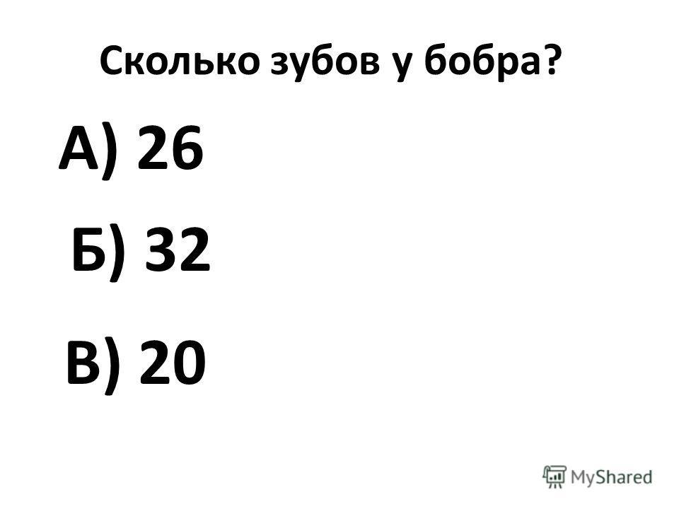 Сколько зубов у бобра? А) 26 Б) 32 В) 20