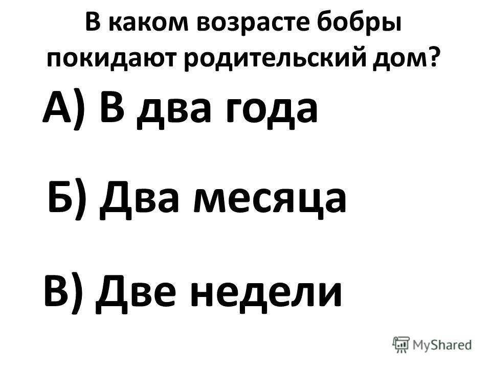 В каком возрасте бобры покидают родительский дом? А) В два года Б) Два месяца В) Две недели
