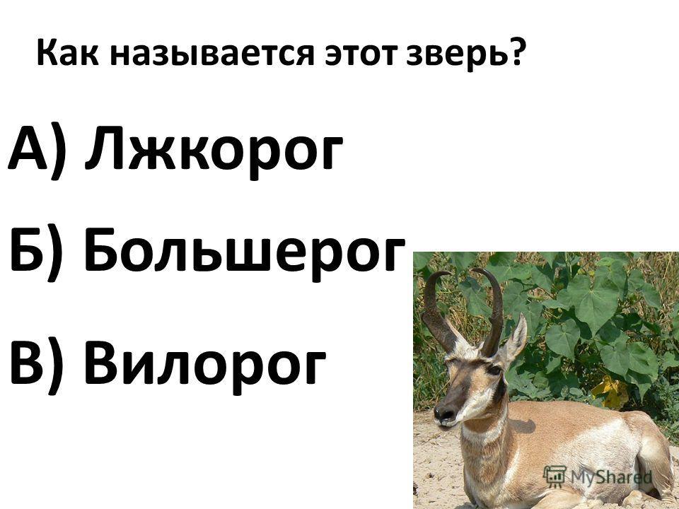 Как называется этот зверь? А) Лжкорог В) Вилорог Б) Большерог