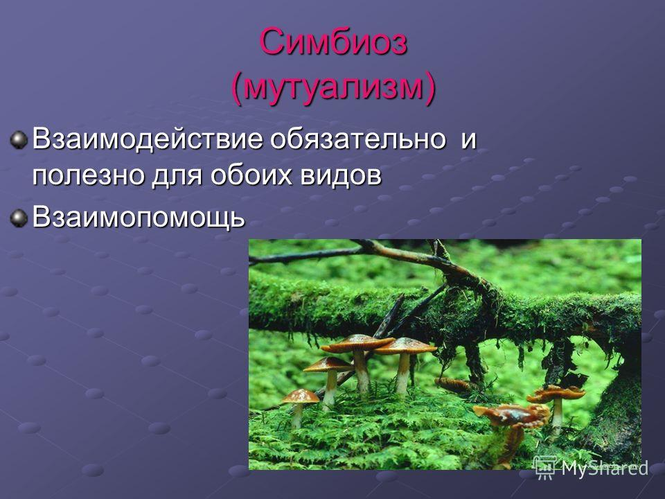 Симбиоз (мутуализм) Взаимодействие обязательно и полезно для обоих видов Взаимопомощь