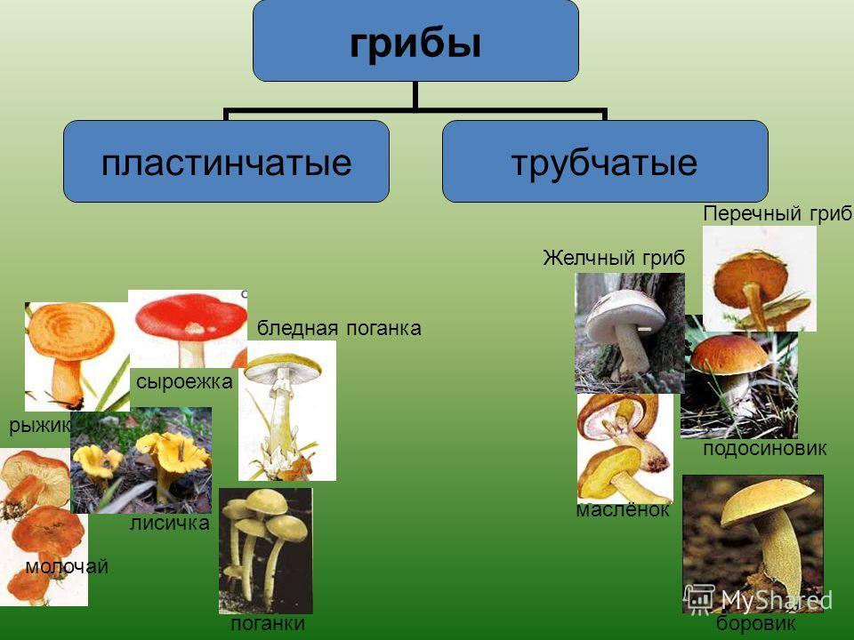 Грибы СъедобныеЯдовитые На какие группы можно разбить грибы?