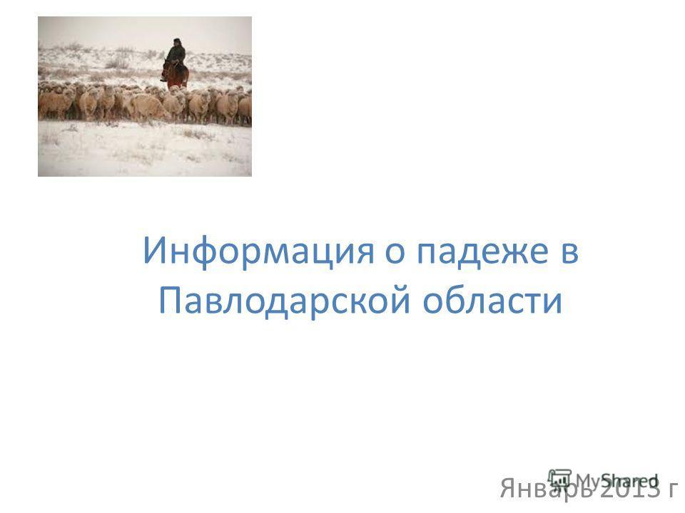 Информация о падеже в Павлодарской области Январь 2013 г