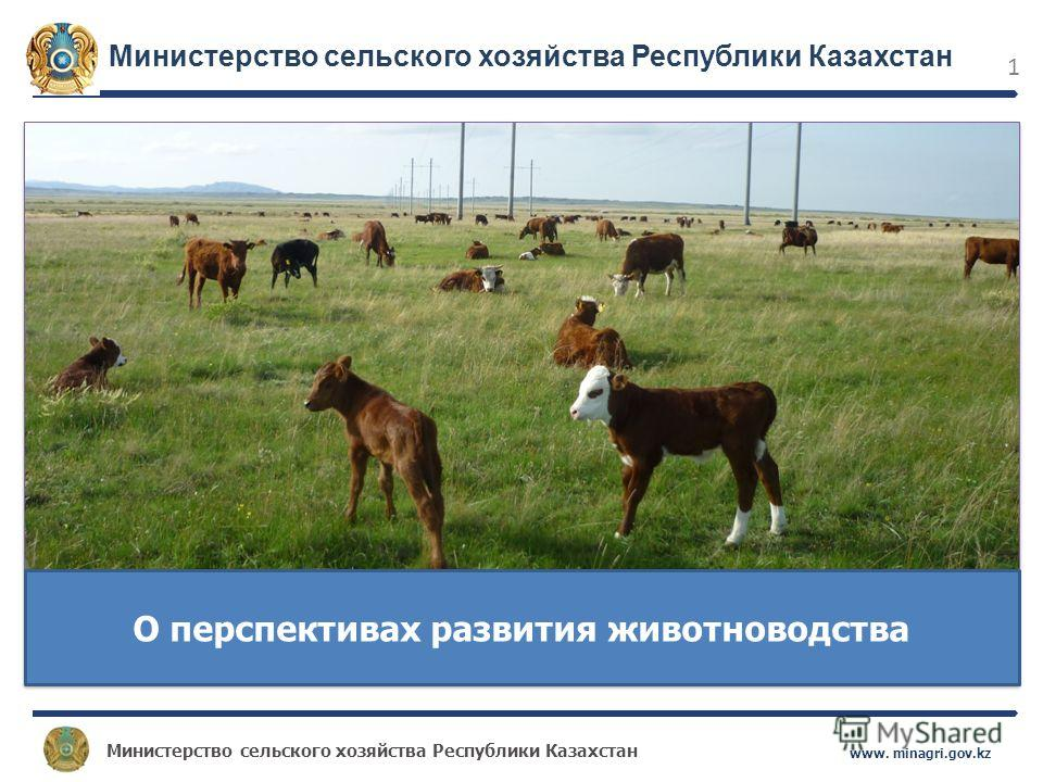 Министерство сельского хозяйства Республики Казахстан www. minagri.gov.kz 1 О перспективах развития животноводства Министерство сельского хозяйства Республики Казахстан
