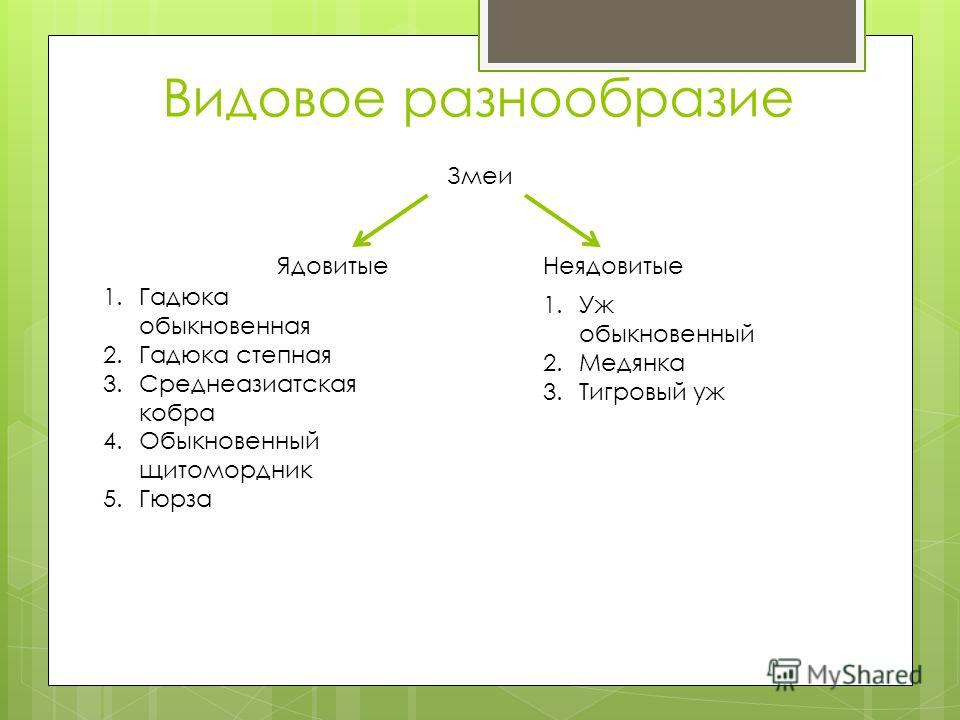 Видовое разнообразие Змеи ЯдовитыеНеядовитые 1.Гадюка обыкновенная 2.Гадюка степная 3.Среднеазиатская кобра 4.Обыкновенный щитомордник 5.Гюрза 1.Уж обыкновенный 2.Медянка 3.Тигровый уж