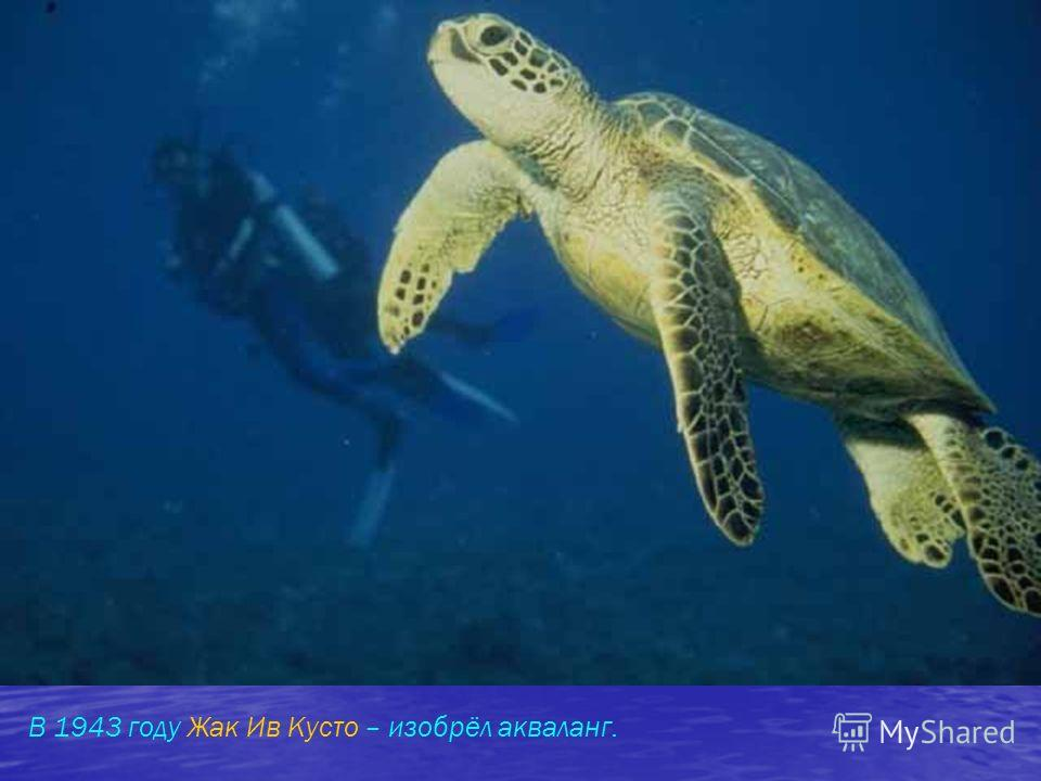 В 1943 году Жак Ив Кусто – изобрёл акваланг.