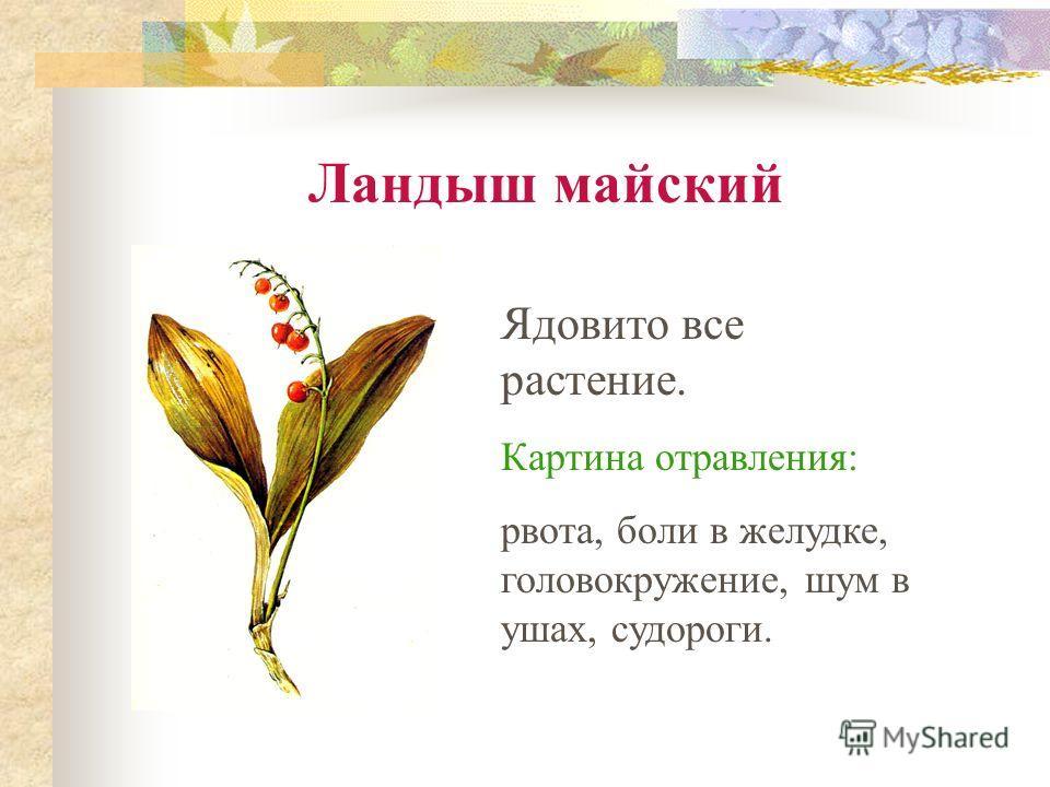 Ландыш майский Ядовито все растение. Картина отравления: рвота, боли в желудке, головокружение, шум в ушах, судороги.