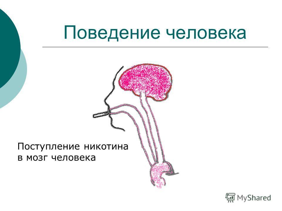Поведение человека Поступление никотина в мозг человека