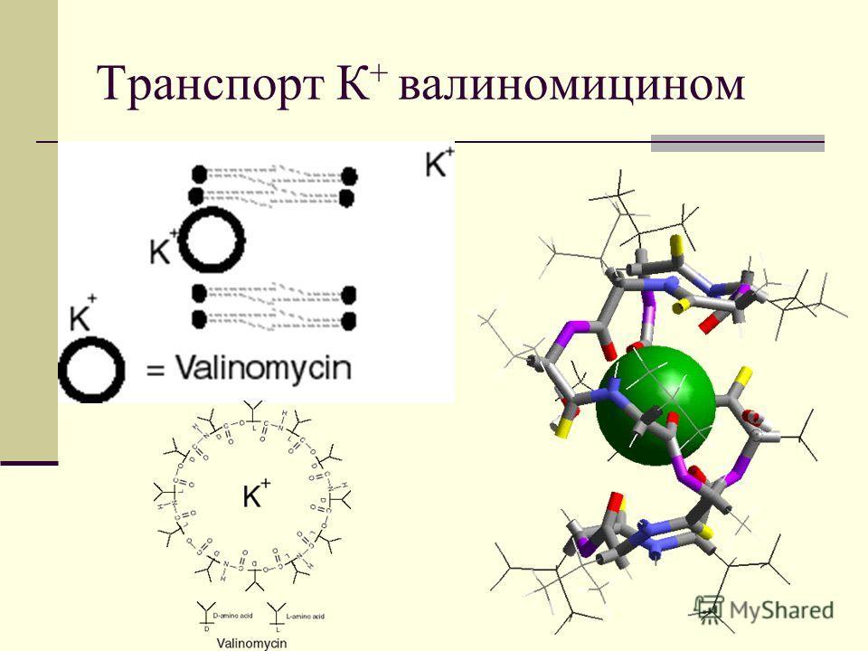 Транспорт К + валиномицином