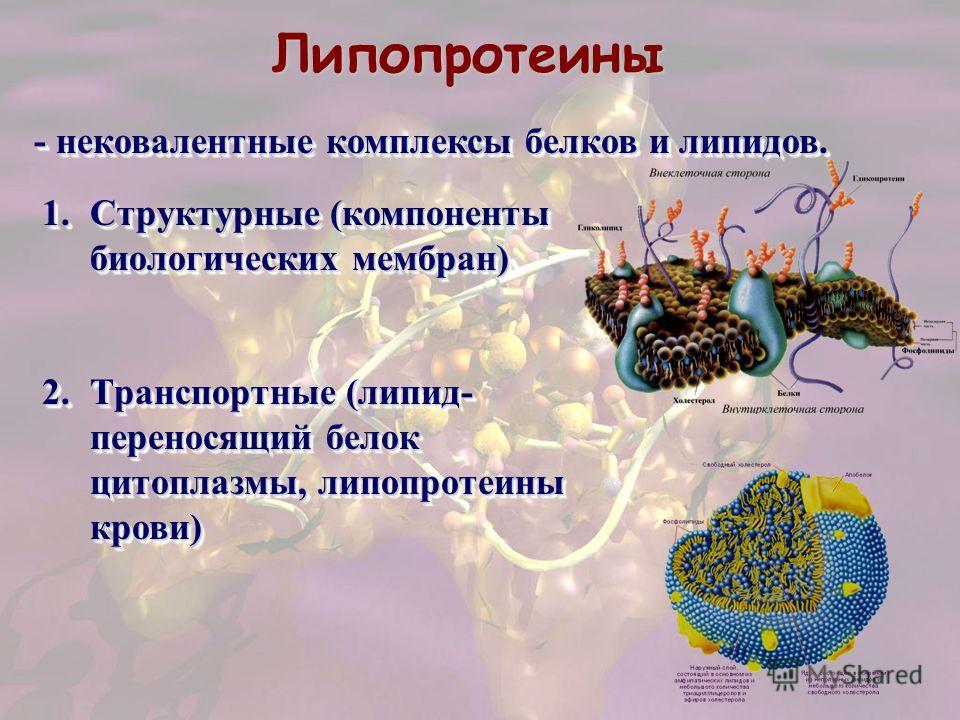 Липопротеины - нековалентные комплексы белков и липидов. 1.Структурные (компоненты биологических мембран) 2.Транспортные (липид- переносящий белок цитоплазмы, липопротеины крови) 1.Структурные (компоненты биологических мембран) 2.Транспортные (липид-
