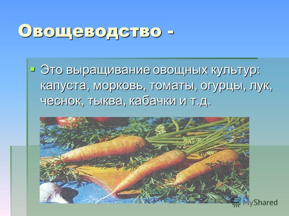 Овощеводство - Это выращивание овощных культур: капуста, морковь, томаты, огурцы, лук, чеснок, тыква, кабачки и т.д. Это выращивание овощных культур: капуста, морковь, томаты, огурцы, лук, чеснок, тыква, кабачки и т.д.