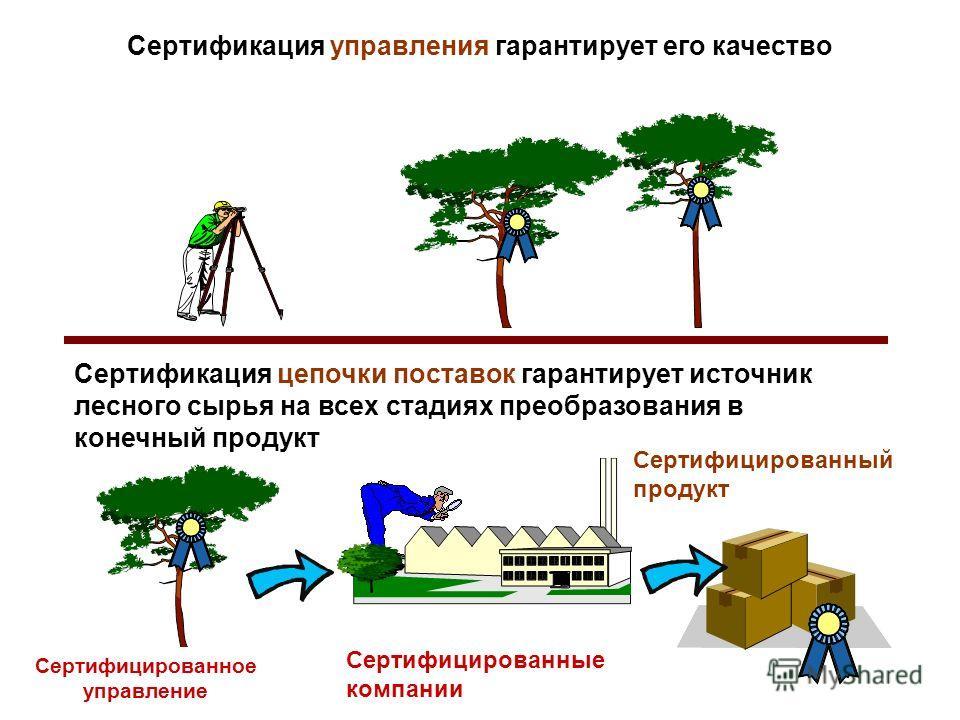 Сертификация управления гарантирует его качество Сертификация цепочки поставок гарантирует источник лесного сырья на всех стадиях преобразования в конечный продукт Сертифицированное управление Сертифицированные компании Сертифицированный продукт