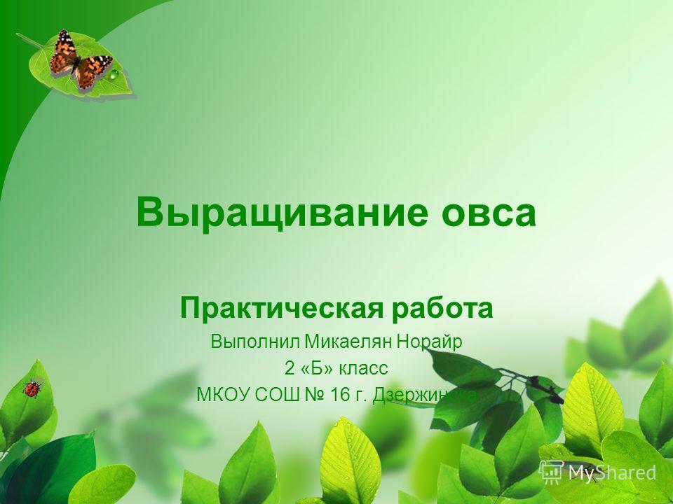 Выращивание овса Практическая работа Выполнил Микаелян Норайр 2 «Б» класс МКОУ СОШ 16 г. Дзержинска