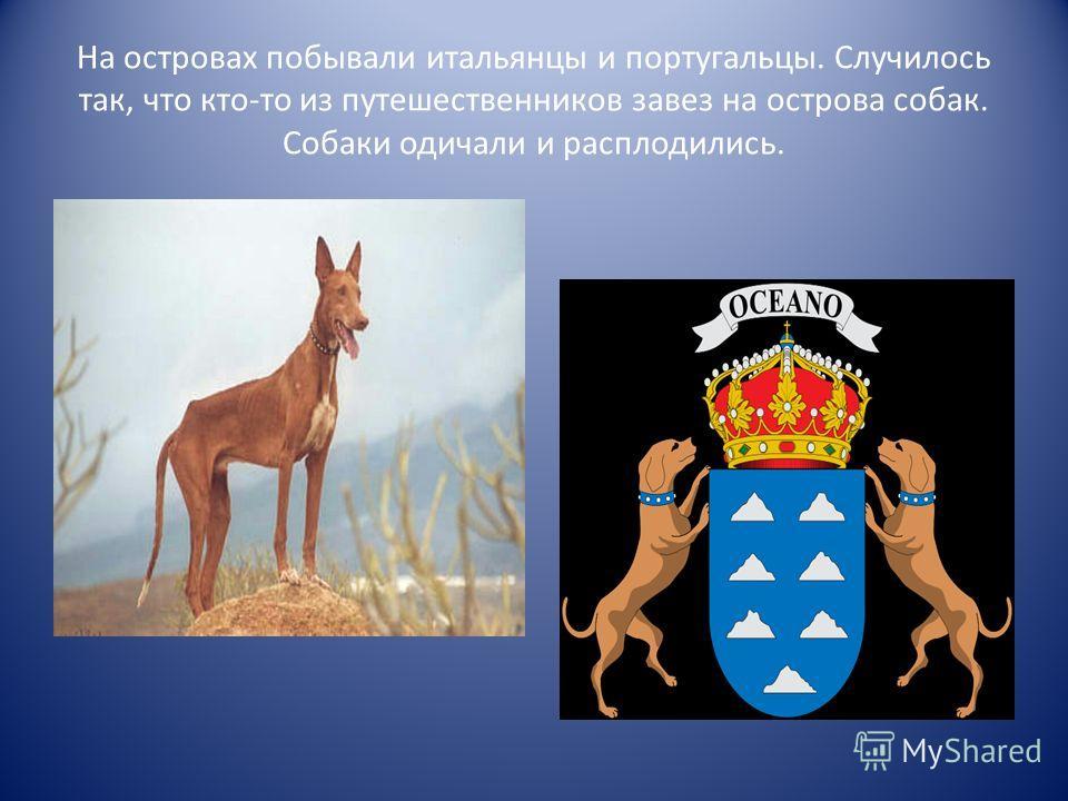 На островах побывали итальянцы и португальцы. Случилось так, что кто-то из путешественников завез на острова собак. Собаки одичали и расплодились.