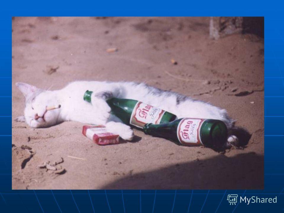 Птицы (воробьи, голуби) погибают, если к их клюву всего лишь поднести стеклянную палочку, смоченную никотином Кролик погибает от 1/4 капли никотина, собака - от 1/2 капли. собака - от 1/2 капли. Для человека смертельная доза никотина составляет от 50
