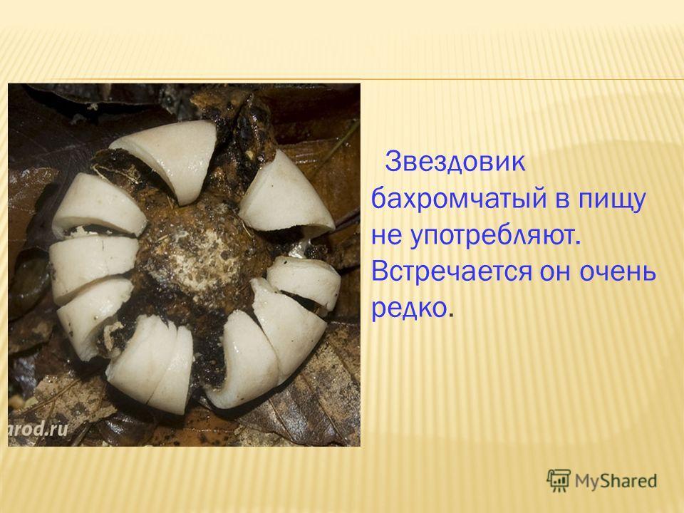Звездовик бахромчатый в пищу не употребляют. Встречается он очень редко.