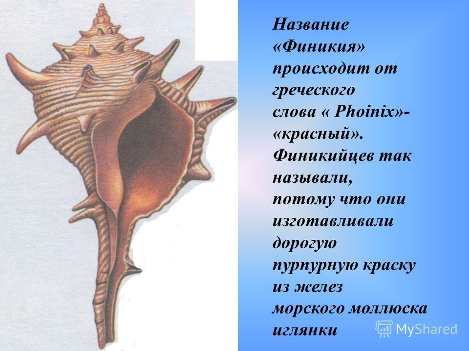 Название «Финикия» происходит от греческого слова « Phoinix»- «красный». Финикийцев так называли, потому что они изготавливали дорогую пурпурную краску из желез морского моллюска иглянки