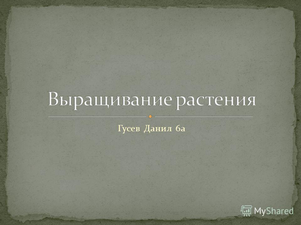 Гусев Данил 6а