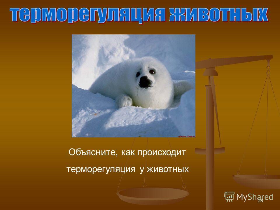 39 Объясните, как происходит терморегуляция у животных
