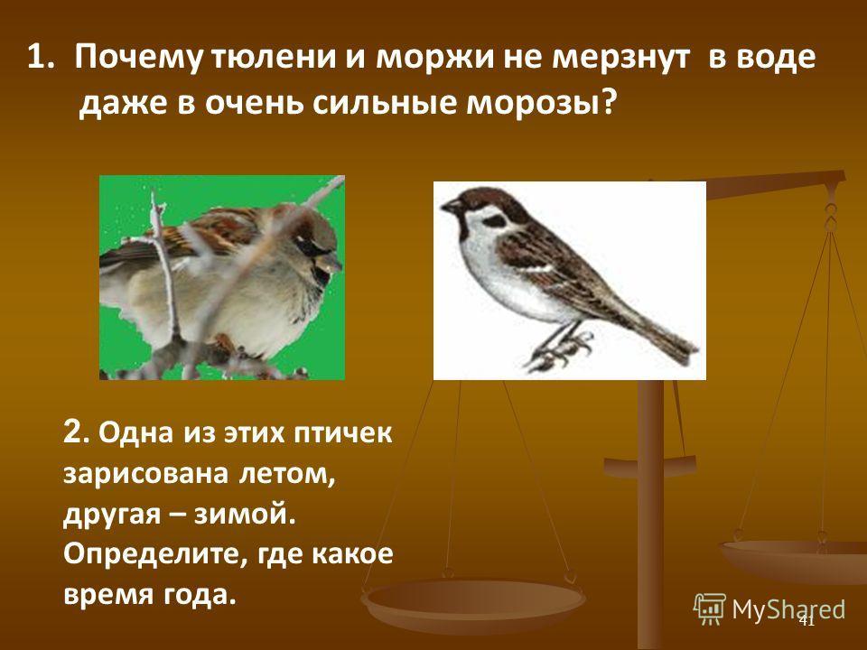 41 2. Одна из этих птичек зарисована летом, другая – зимой. Определите, где какое время года. 1. Почему тюлени и моржи не мерзнут в воде даже в очень сильные морозы?