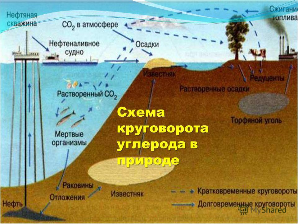 Схема круговорота углерода в природе