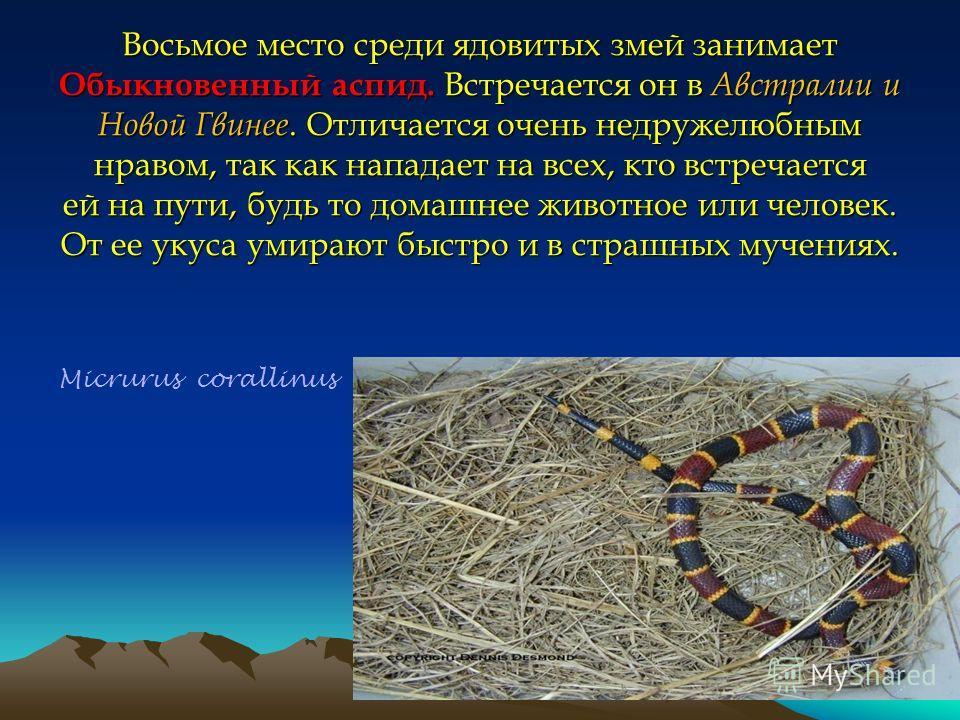 Восьмое место среди ядовитых змей занимает Обыкновенный аспид. Встречается он в Австралии и Новой Гвинее. Отличается очень недружелюбным нравом, так как нападает на всех, кто встречается ей на пути, будь то домашнее животное или человек. От ее укуса