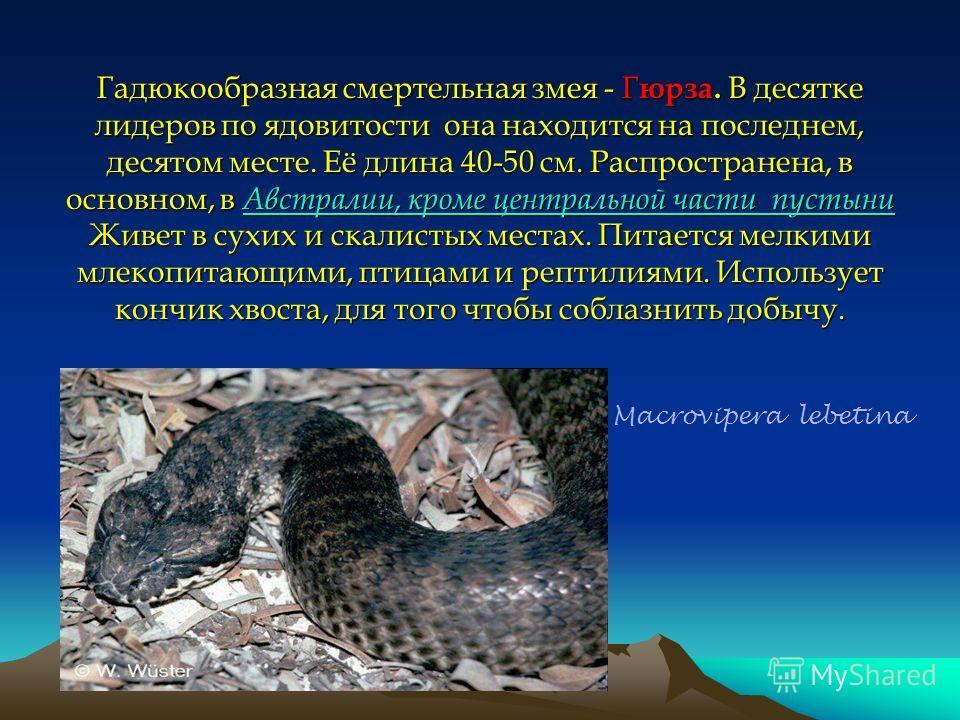 Гадюкообразная смертельная змея - Г юрза. В десятке лидеров по ядовитости она находится на последнем, десятом месте. Её длина 40-50 см. Распространена, в основном, в Австралии, кроме центральной части пустыни Живет в сухих и скалистых местах. Питаетс