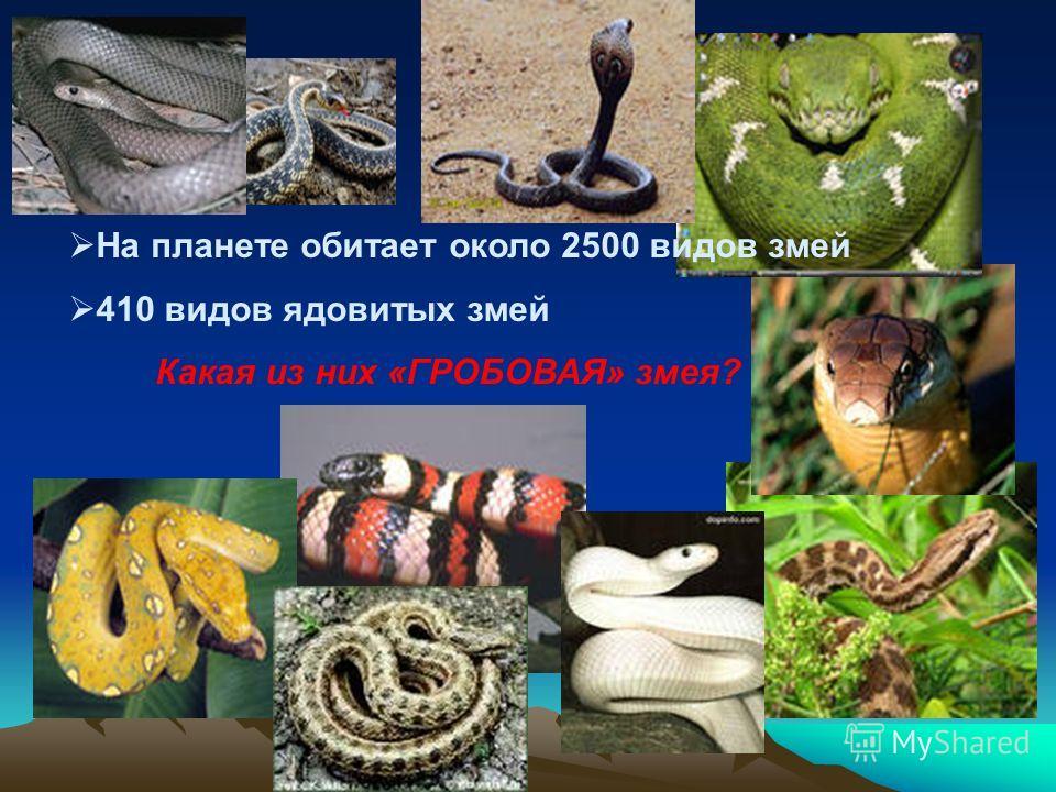 На планете обитает около 2500 видов змей 410 видов ядовитых змей Какая из них «ГРОБОВАЯ» змея?