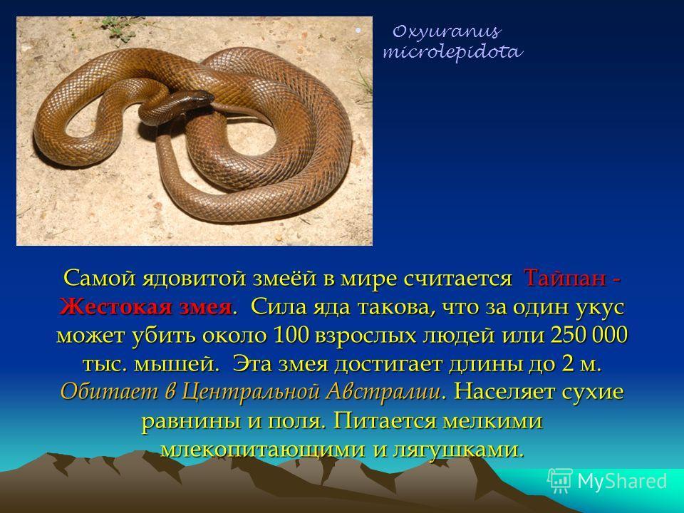 Самой ядовитой змеёй в мире считается Тайпан - Жестокая змея. Сила яда такова, что за один укус может убить около 100 взрослых людей или 250 000 тыс. мышей. Эта змея достигает длины до 2 м. Обитает в Центральной Австралии. Населяет сухие равнины и по