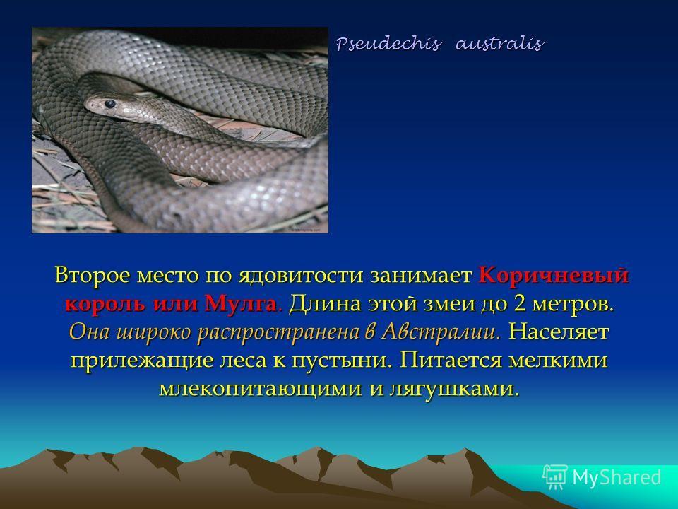 Pseudechis australis Второе место по ядовитости занимает Коричневый король или Mулга. Длина этой змеи до 2 метров. Она широко распространена в Австралии. Населяет прилежащие леса к пустыни. Питается мелкими млекопитающими и лягушками. Pseudechis aust