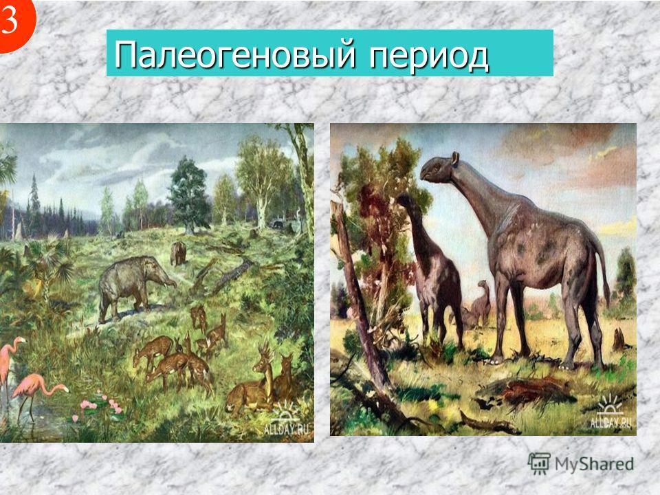 Палеогеновый период 13